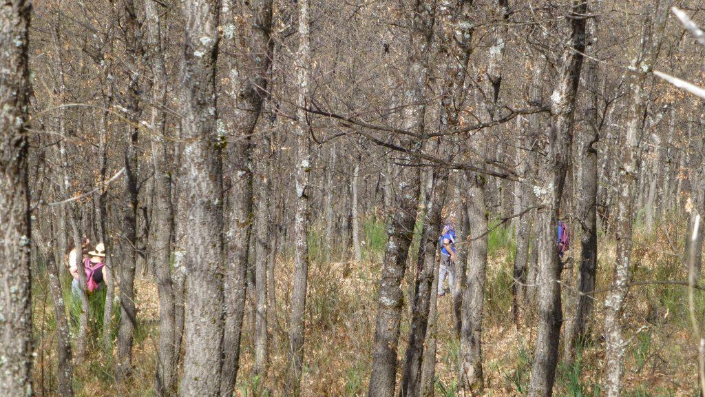 Bosque de rebolo camino de foio castaño