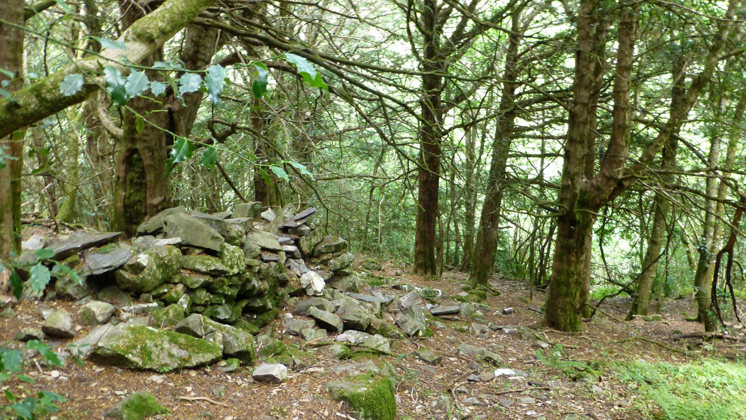 Bosque del Teixadal de Casaio